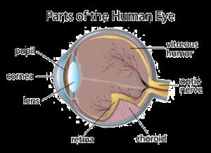 How the human eye works timiznceptzmusic how ccuart Choice Image